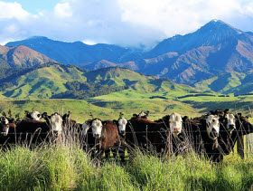 Weekly beef and dairy digest: US beef sales abroad continue to slip